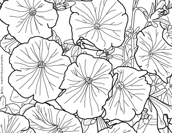 A drawing of petunias.