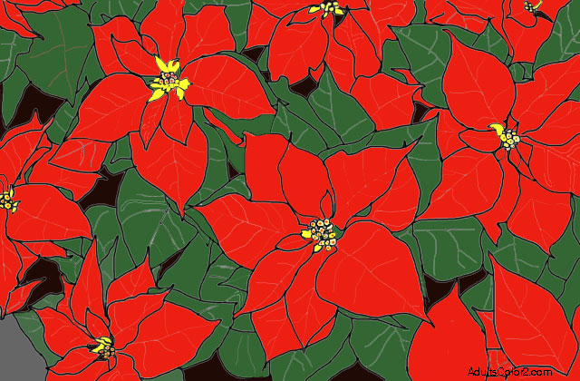 Poinsettias dressed in their Christmas red and green.