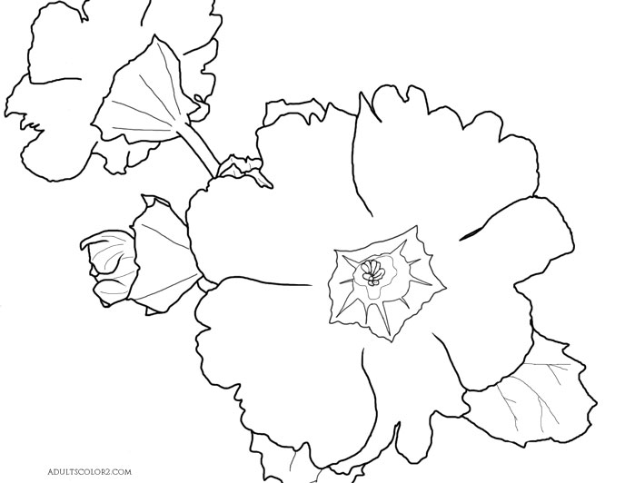 Primrose line drawing for coloring.