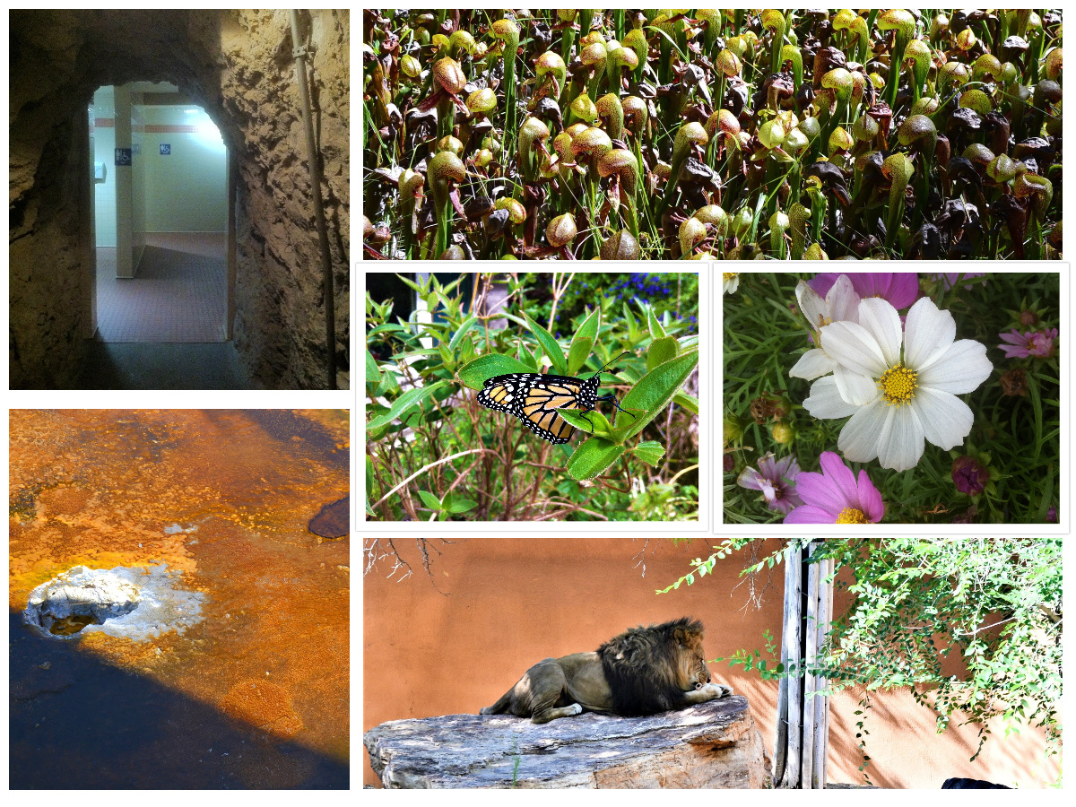 Collage of my Public Domain photos.