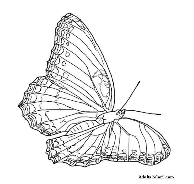 Line drawing of a red spotted purple butterfly.
