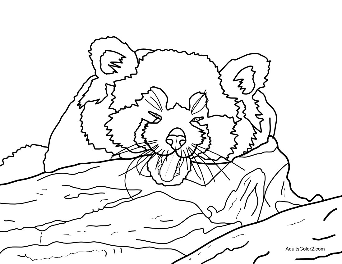 red-panda-coloring-pages-free-75vp0834 . Kids Coloring Book | 850x1100