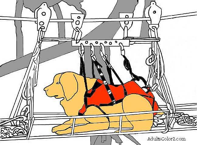 Partially colored rescue dog picture.