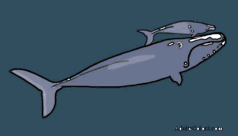 Right  cetacean with baby colored.