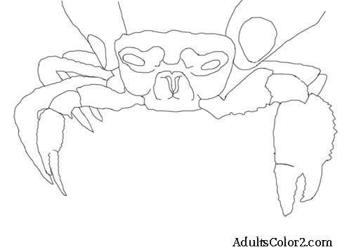 Crab line drawing.