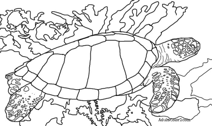 Sea turtle coloring page help hawksbills for Sea turtles coloring pages