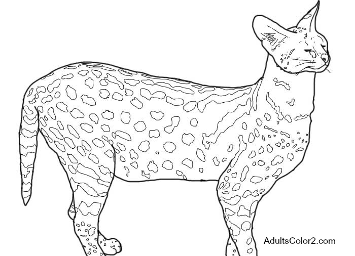Zoo Coloring Pages Free Admittance