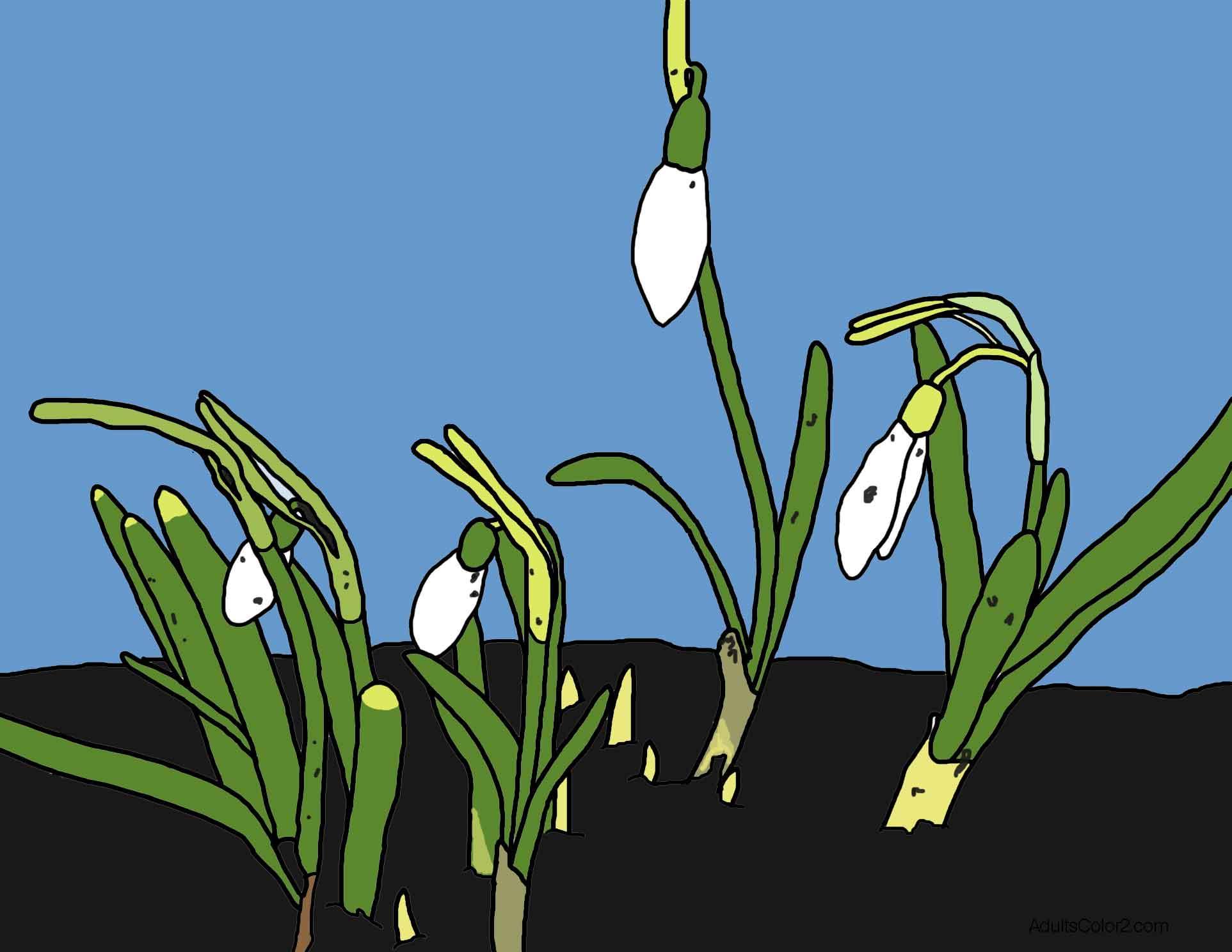 Snowdrop flowers scene.