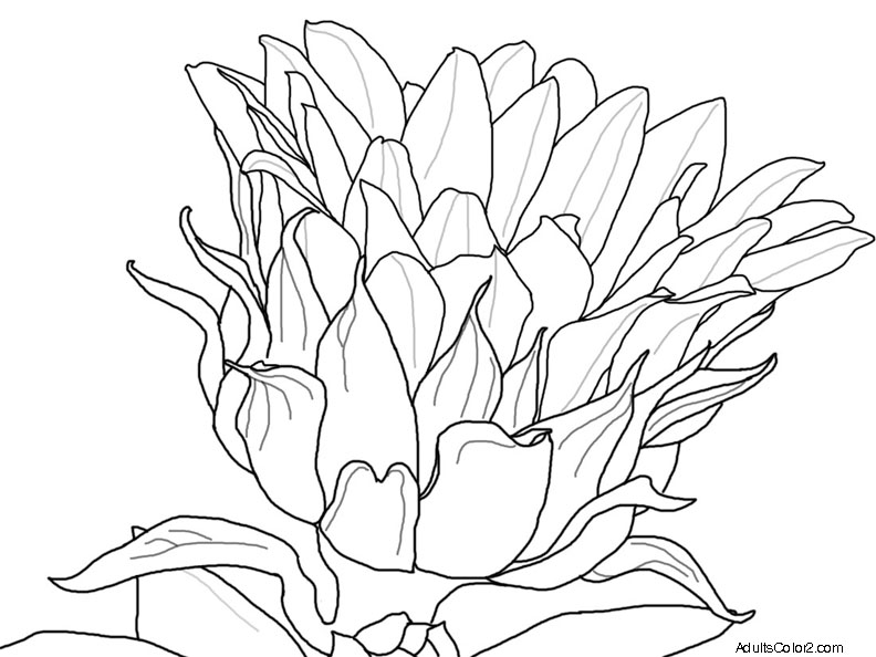 Sketch of a single sunflower.