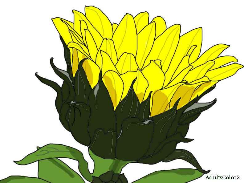 Cheery yellow sunflower reaching for the sky.