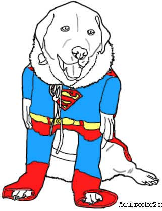 Pup in a  colored in superman suit.