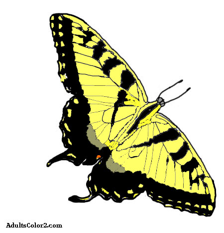 Drawing of tiger swallowtail colored in.