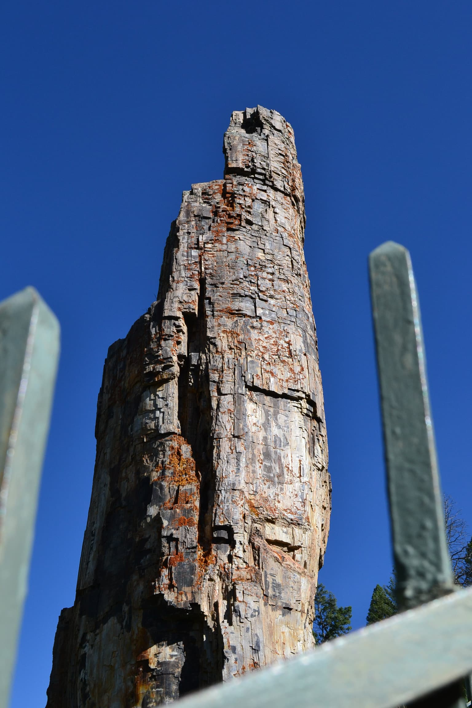 Closeup view of a standing petrified tree.