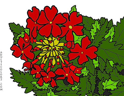 Red verbena flowers.