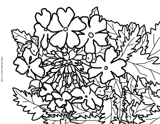 Flowering verbena drawing.