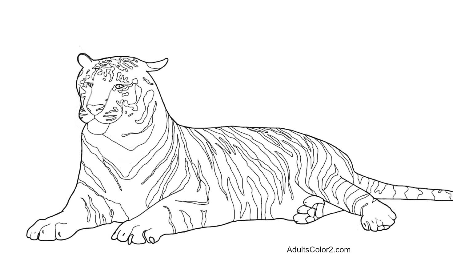 Line Drawing Photo : Tiger coloring pages powerful pussycats
