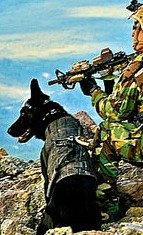 Military working dog training with Seal team member in mountains.