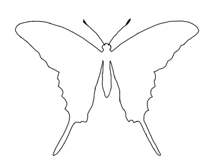 zebra swallowtail butterfly outline